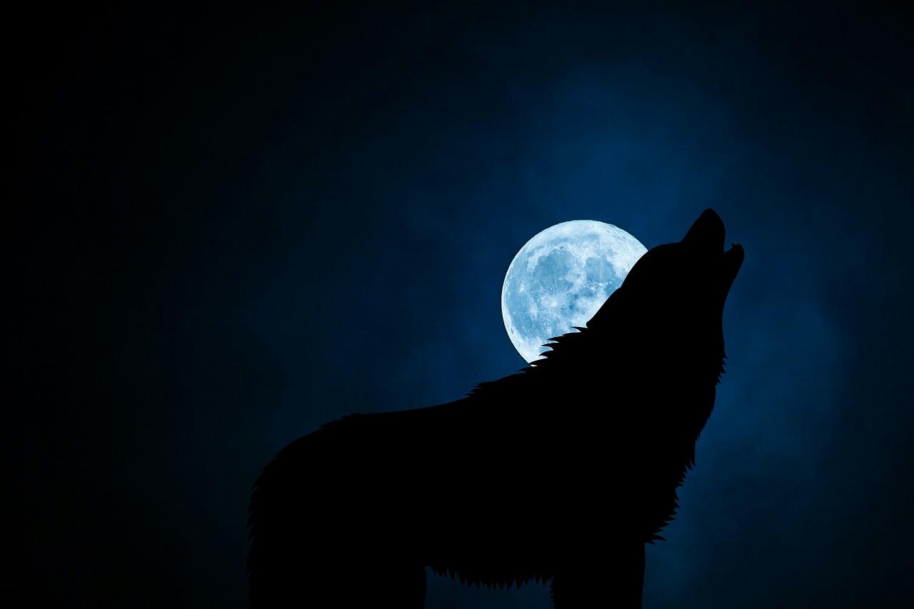 L'audace de l'aigle et la prudence du loup